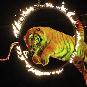 Цирки Ревды